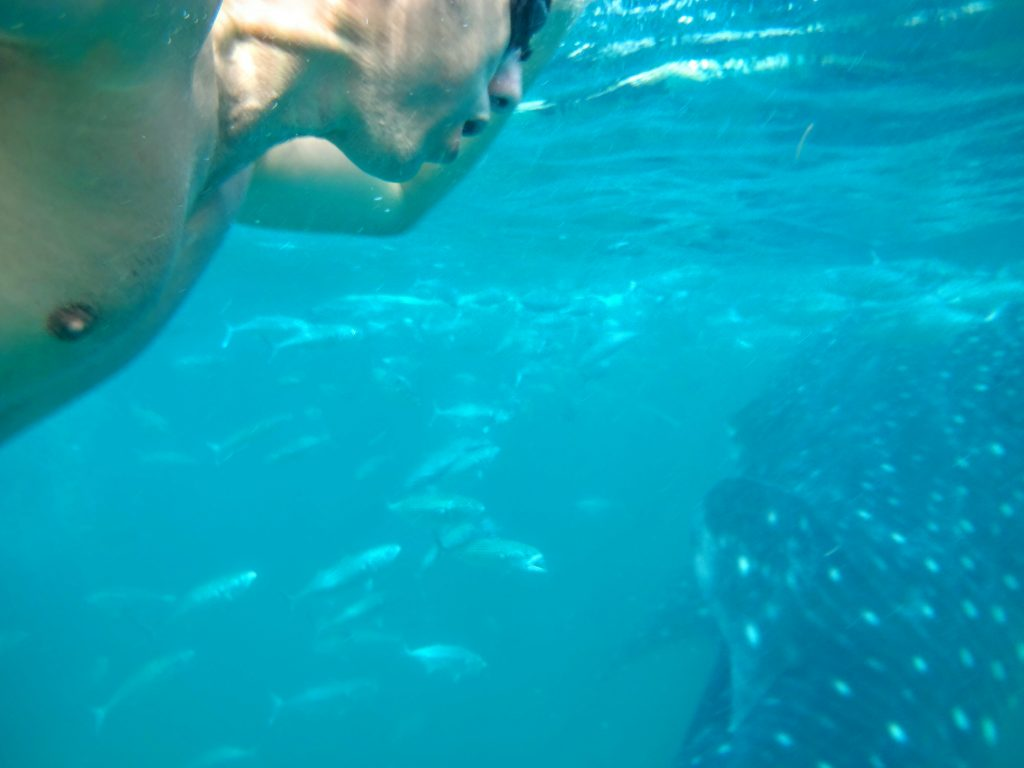 Swimming with Whale Sharks in Oslob, Cebu