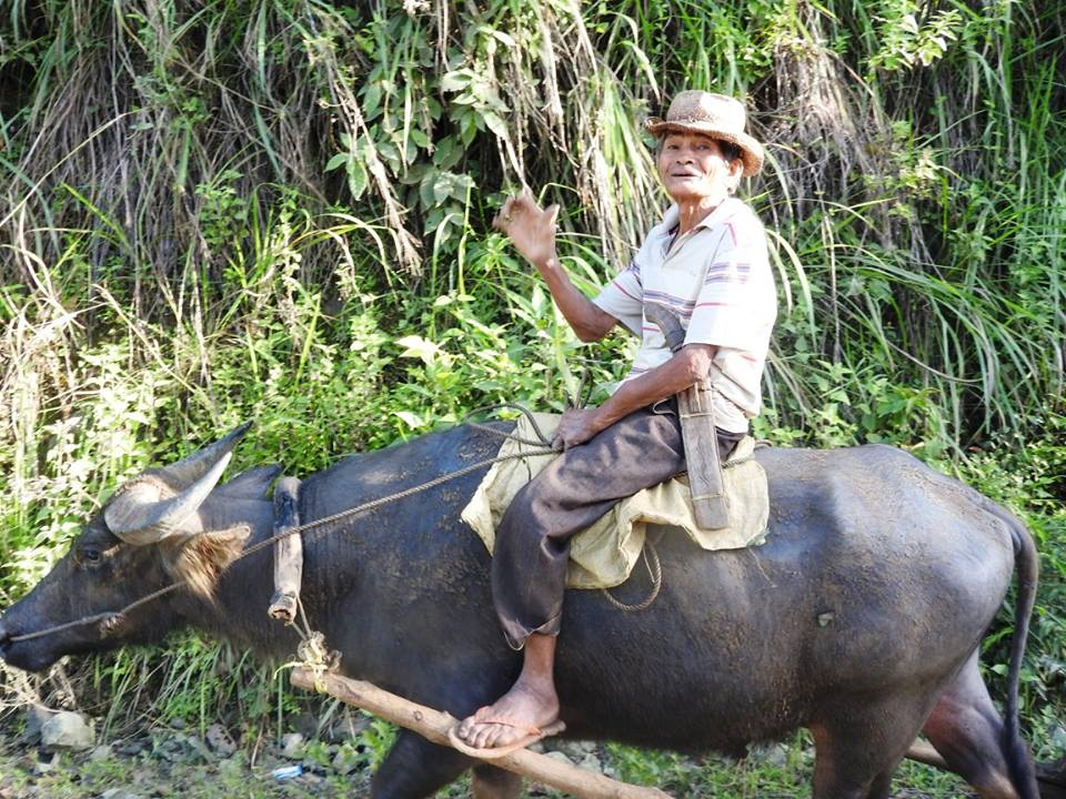 A man on his carabao on the Island of Bohol
