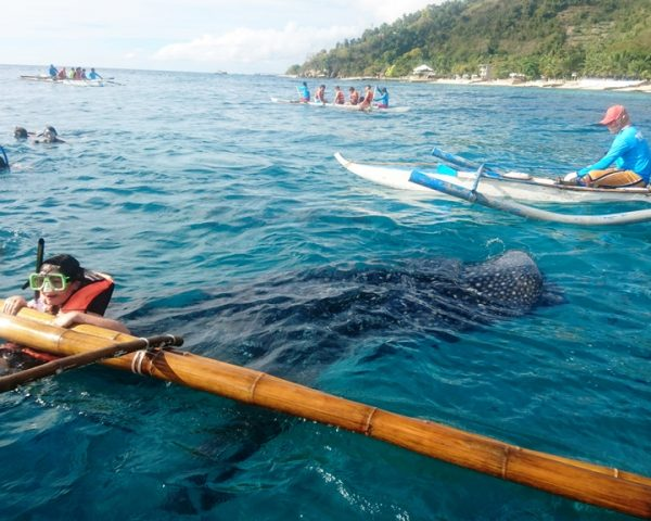 Whale shark watching and swimming in Oslob