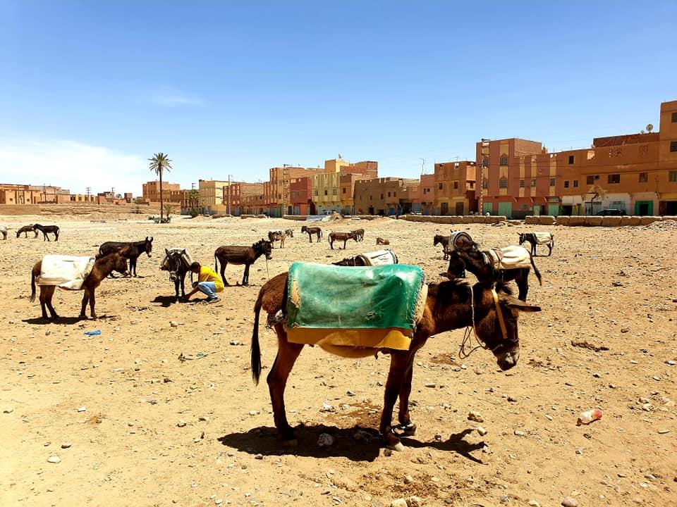 The donkey market in Rissani